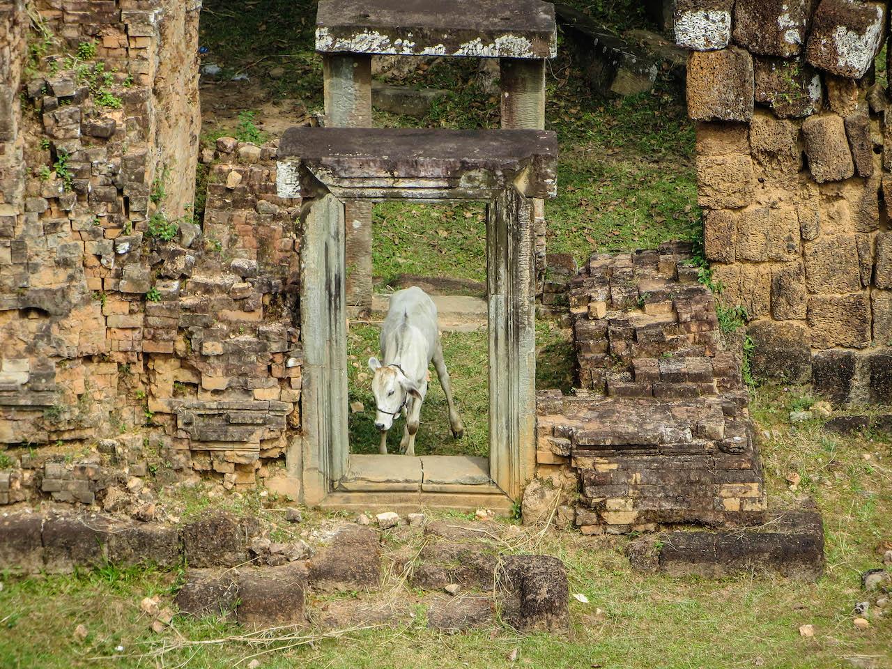 Ein- und Ausblicke in Angkor.