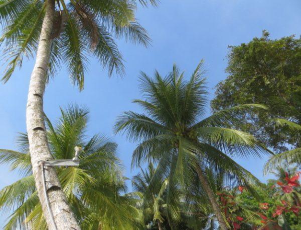 Palawan, das tropische Inselparadies der Philippinen