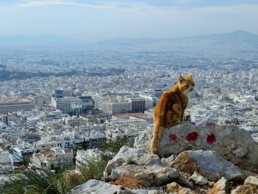 Was du dir in Athen nicht entgehen lassen solltest