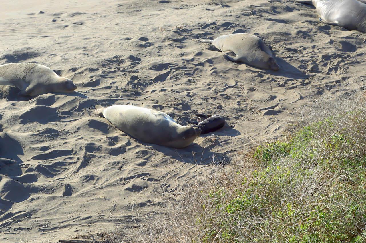 Faul am Strand rumliegen? Das lassen sich einige nicht nehmen....