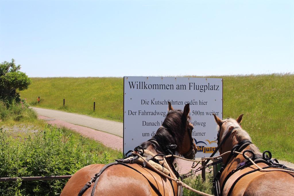 Vom Flugplatz gehts auf Juist mit der Pferdekutsche ins Dorf.