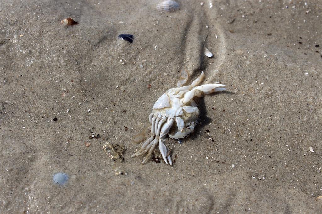 Und was man da alles im Sand findet....