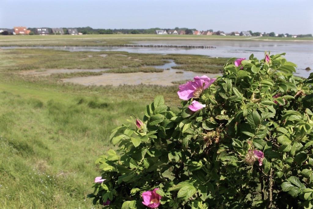 Norderney ist eine richtige Schönheit!