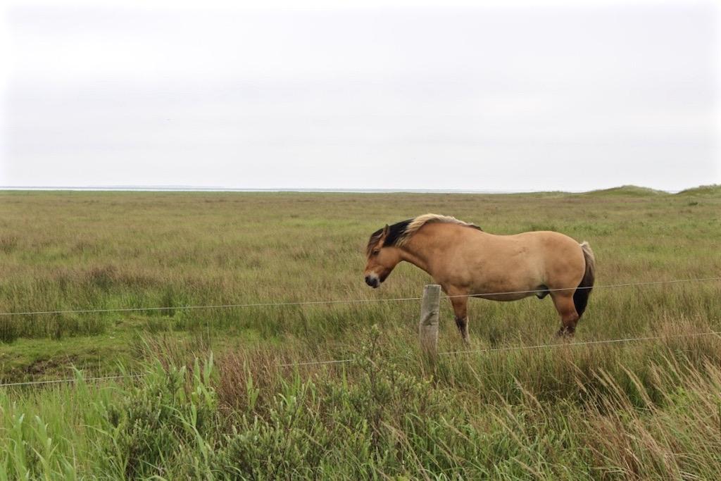Bei Pferden vorbei...