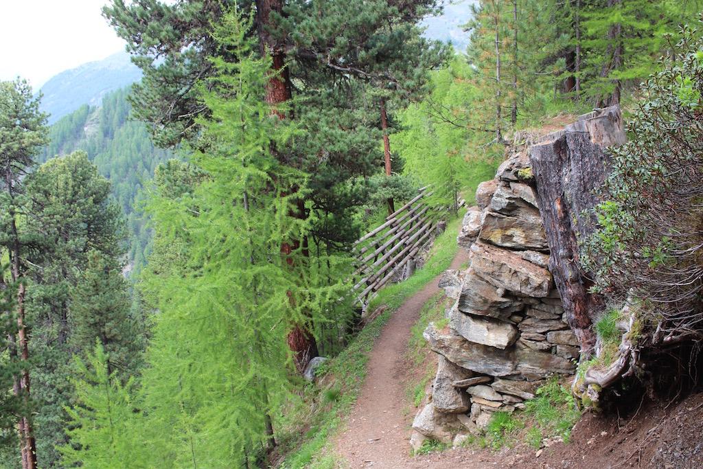 Der Arvenweg nach Zermatt.