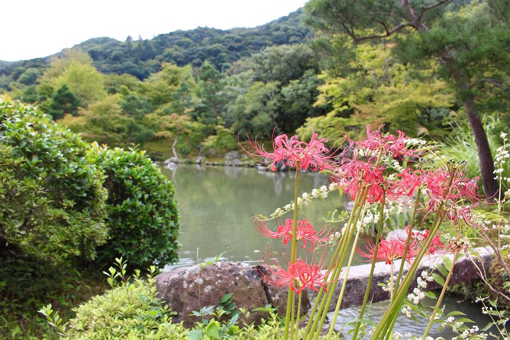 Im Bambushain gibt es stimmungsvolle Orte zu entdecken.