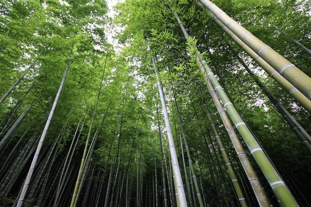 Der Arashiyama-Bambushain in Kyoto.