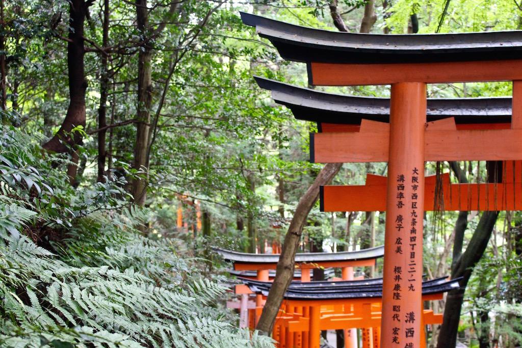 Mitten in einem Wald liegt der der Fushimi Inari-Taisha Schrein.