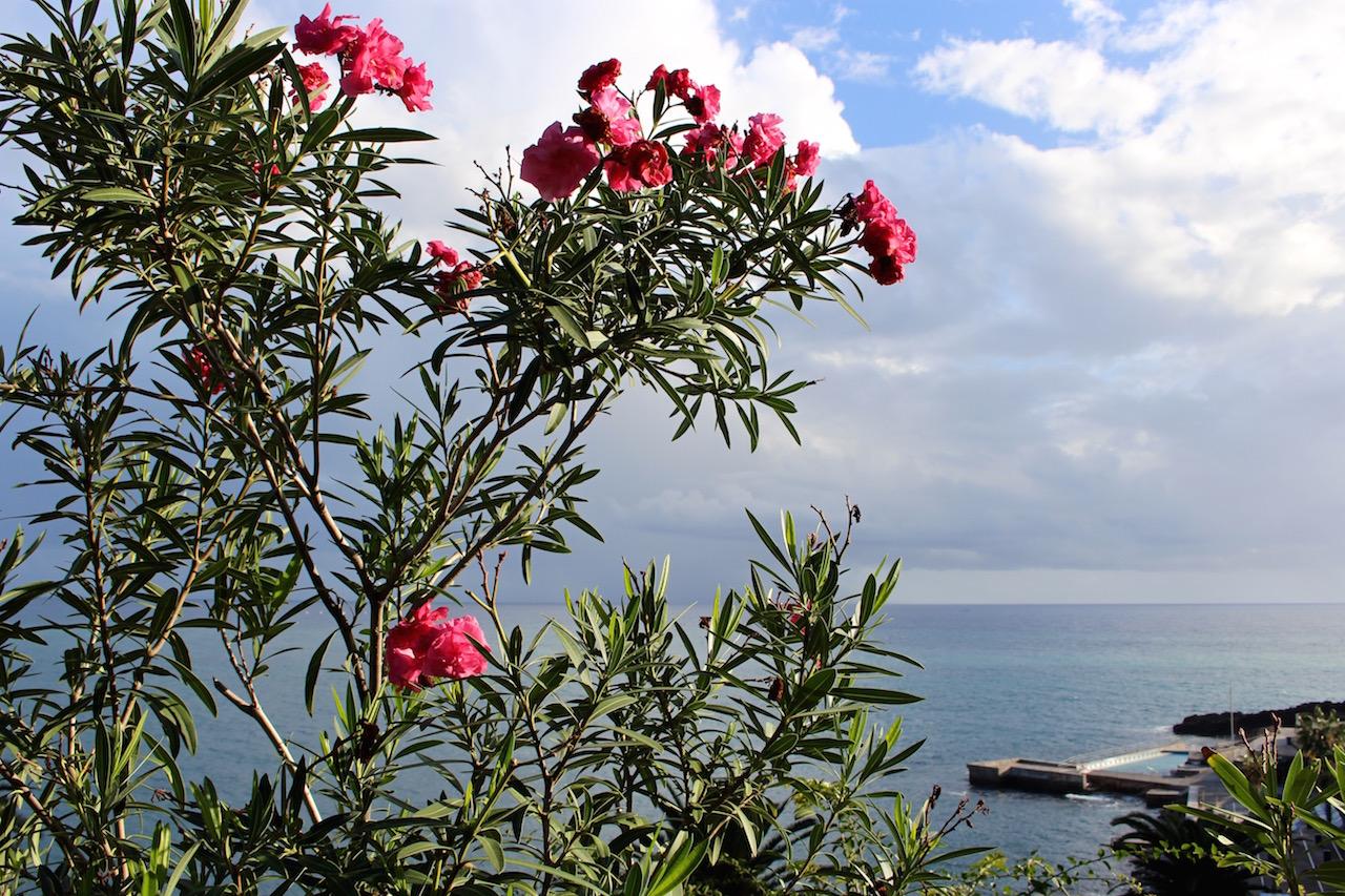 Blumeninsel Madeira?