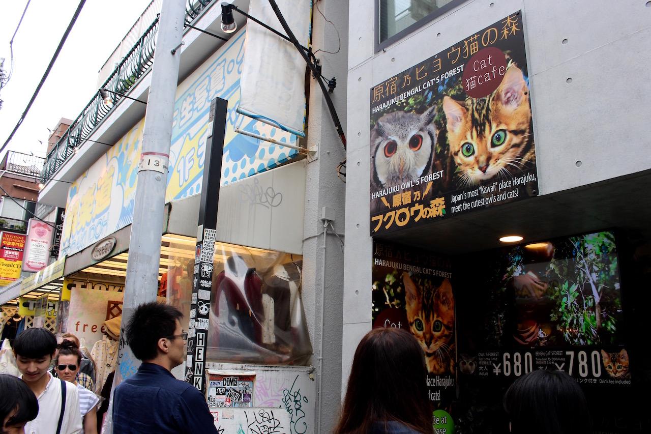 Hier sind die verrücktesten Cafés Tokyos zu finden....