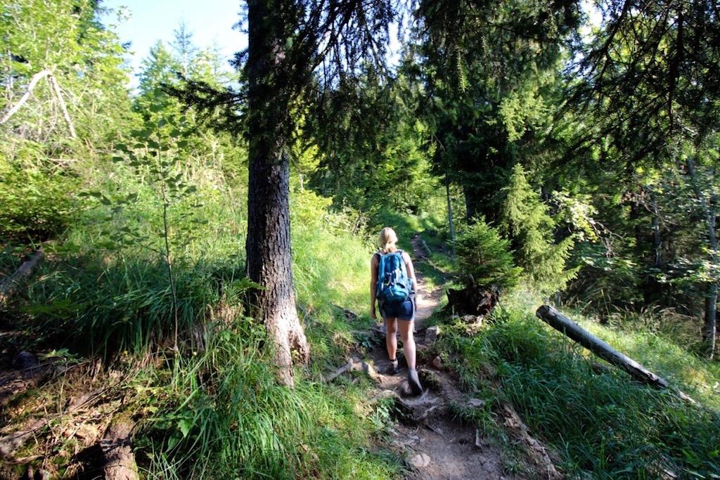 Durch den Wald Richtung Hardergrat.