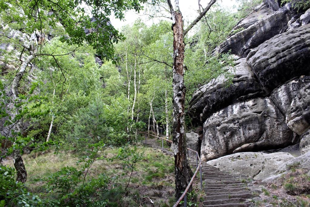 Einsamer Wald um den Lilienstein.