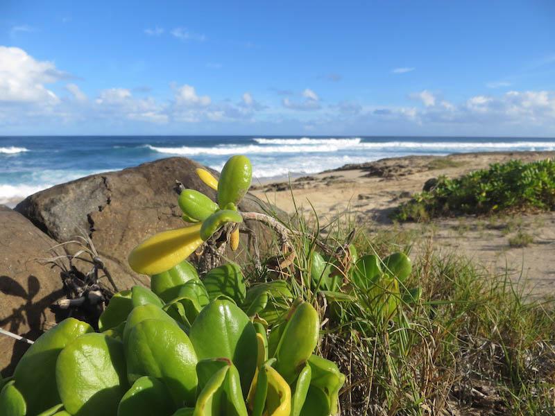 Wunderschönes Oahu.