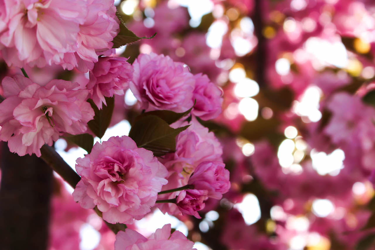 Blütenpracht im Thurgau.