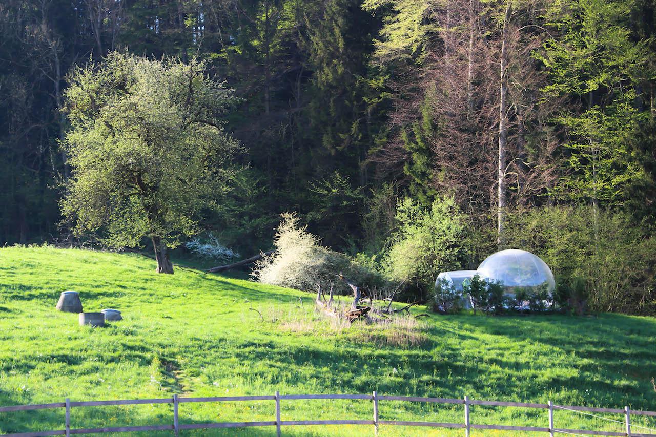 Die Bubble auf dem Hof Gertau.