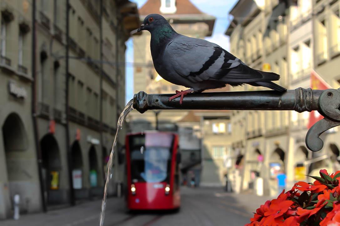In Berns Innenstadt.