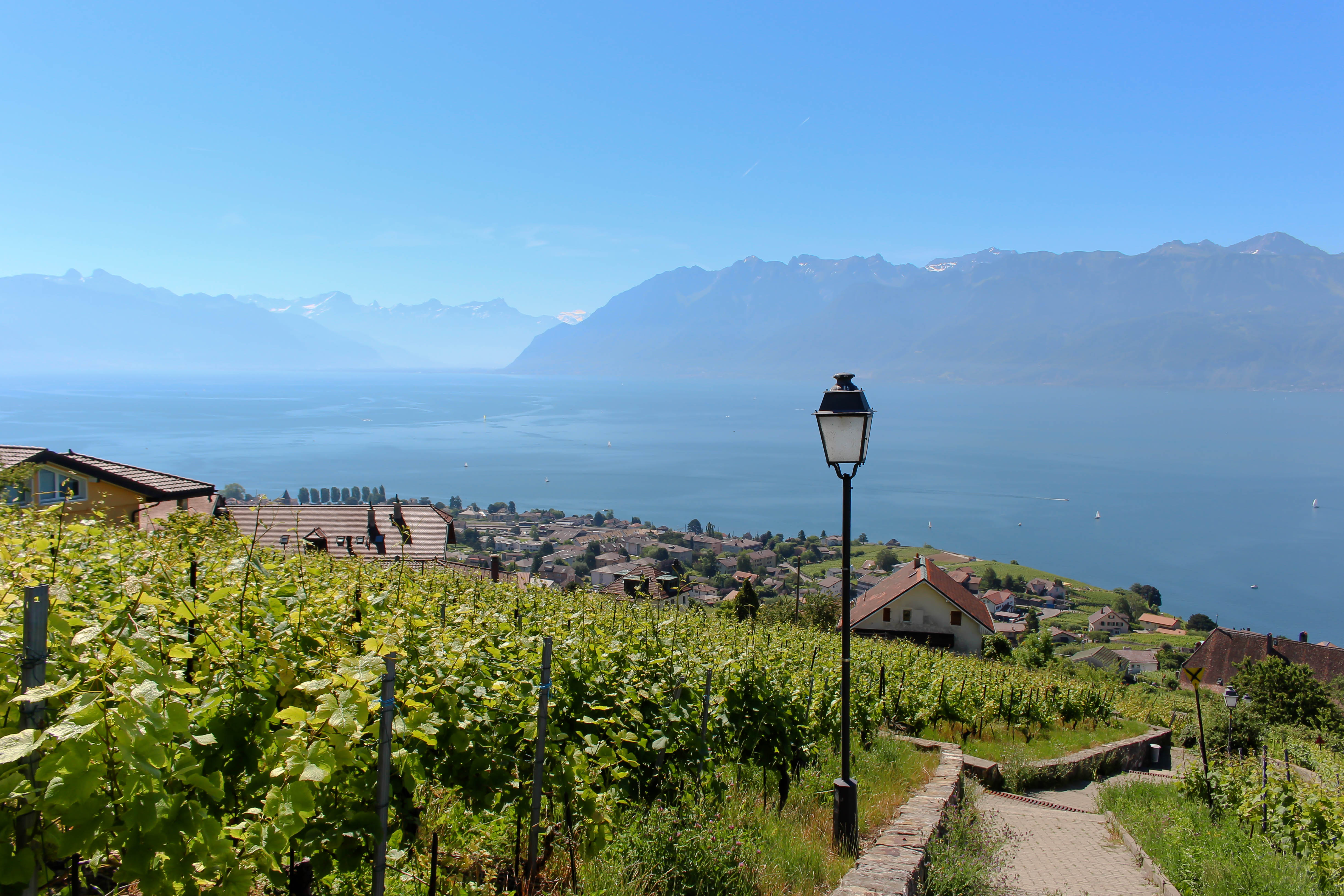 Lavaux am Genfersee.