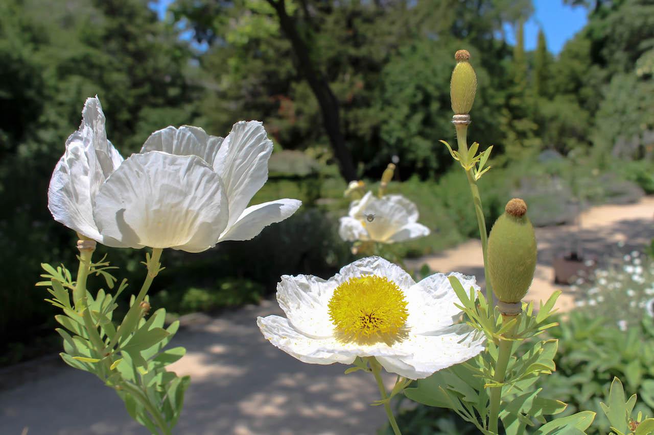 Im Botanischen Garten in Madrid.