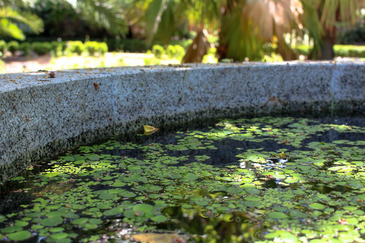 Einsichten im Botanischen Garten in Madrid.