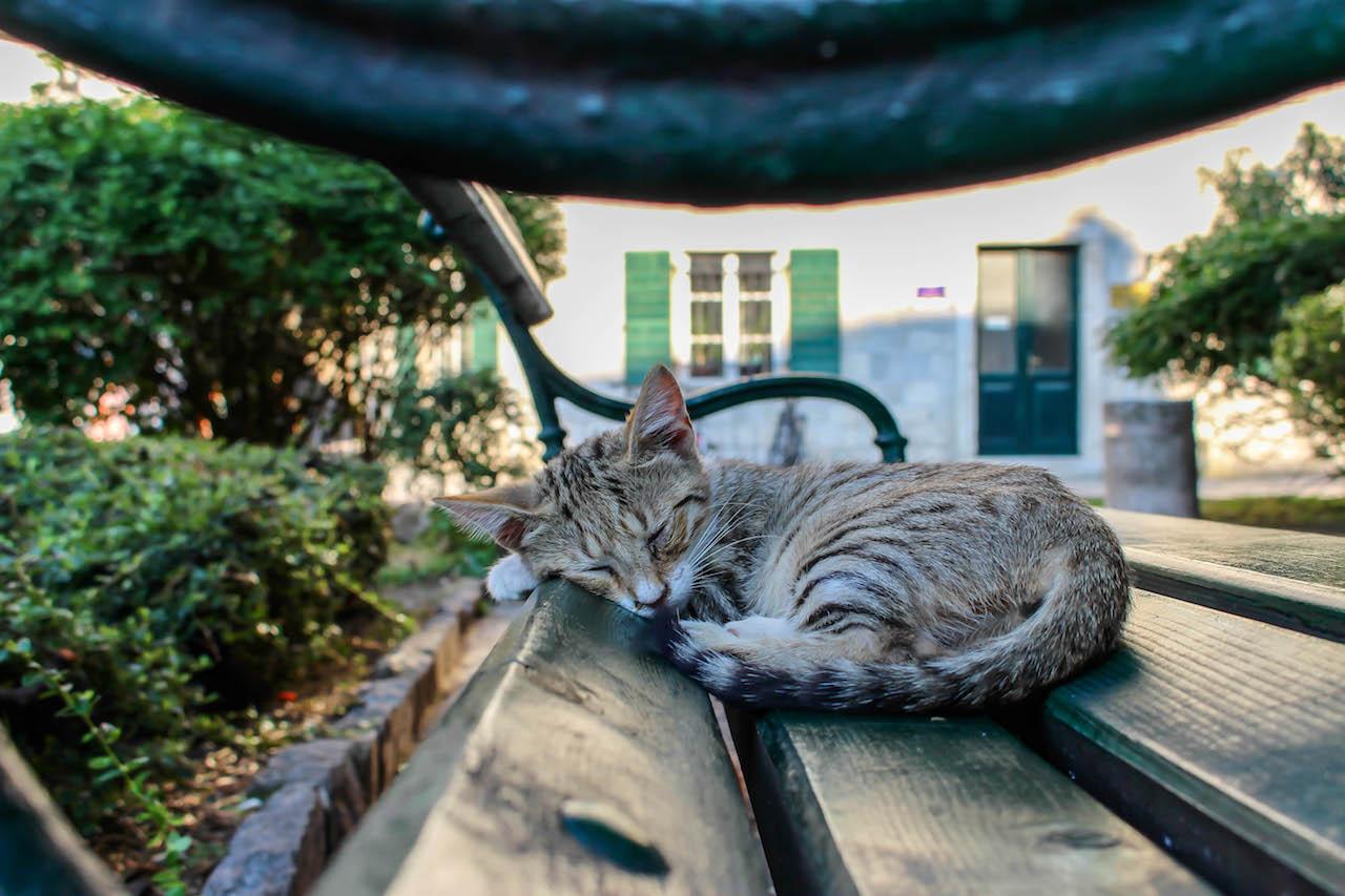 Die Katzen von Kotor.