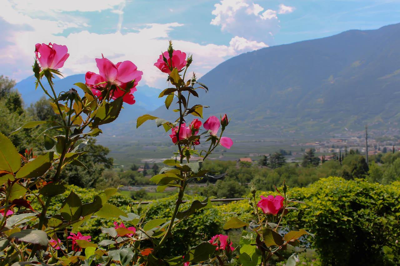 Extravagante Botanische Gärten bei Meran!