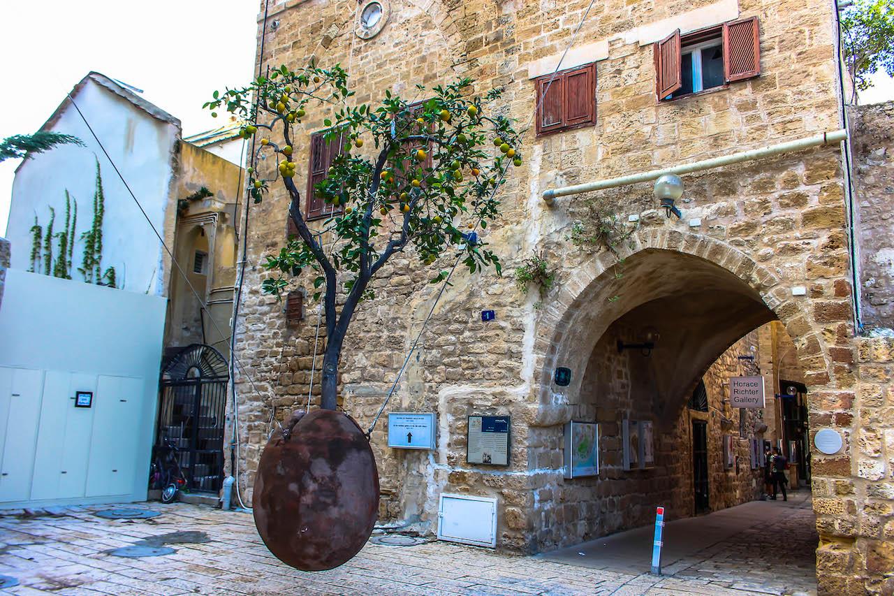 Der letzte Orangenbaum in Jaffa.