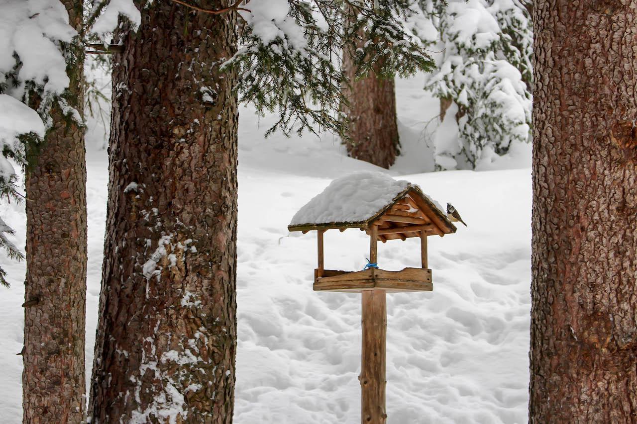 Ein Vogelhaus im Wald.