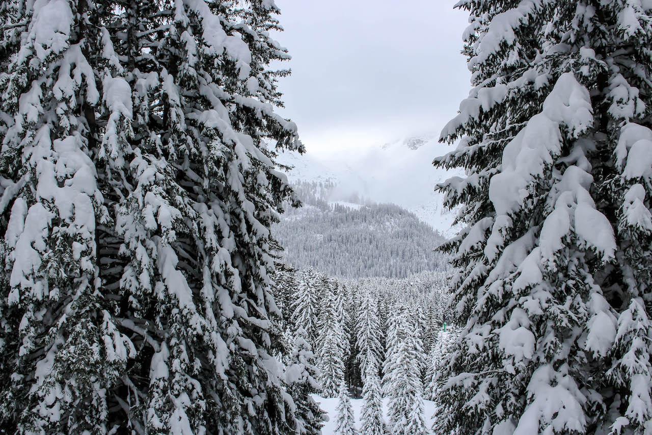 verschneiter Wald in Arosa.