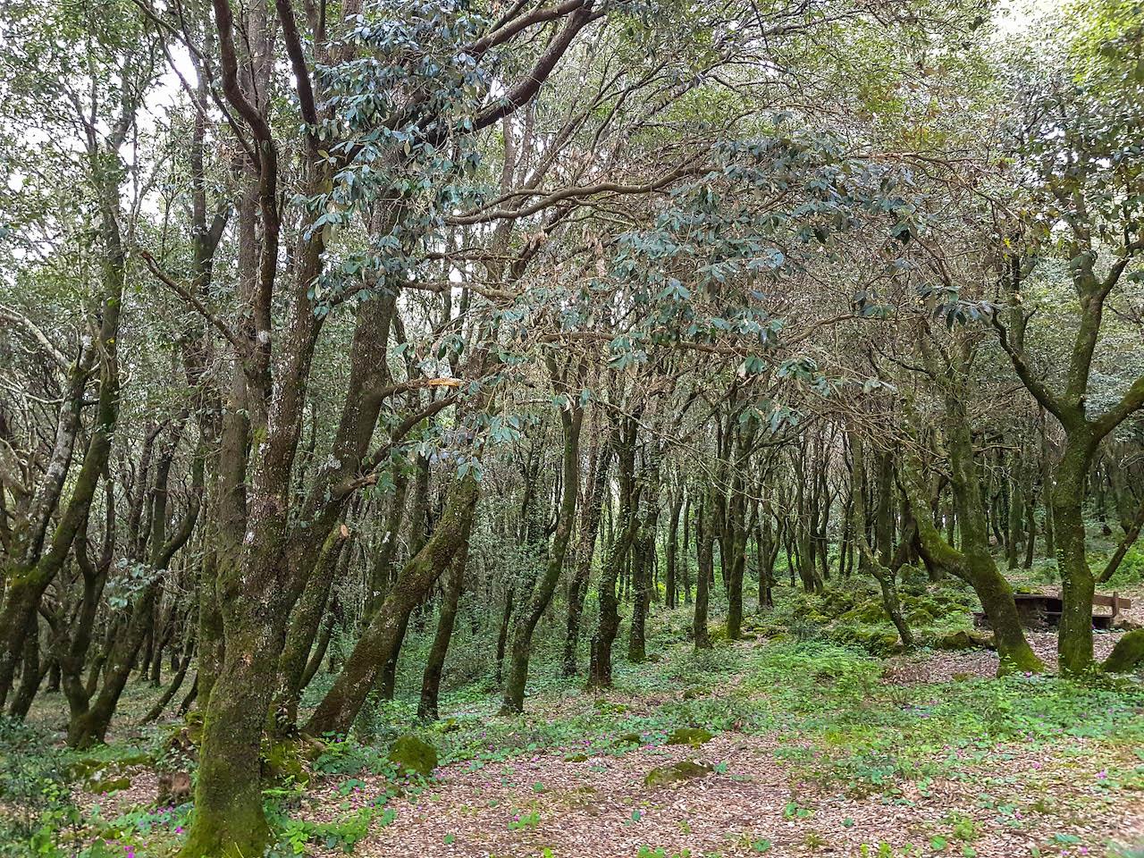 Der Nationalpark Monte Arci auf Sardinien.