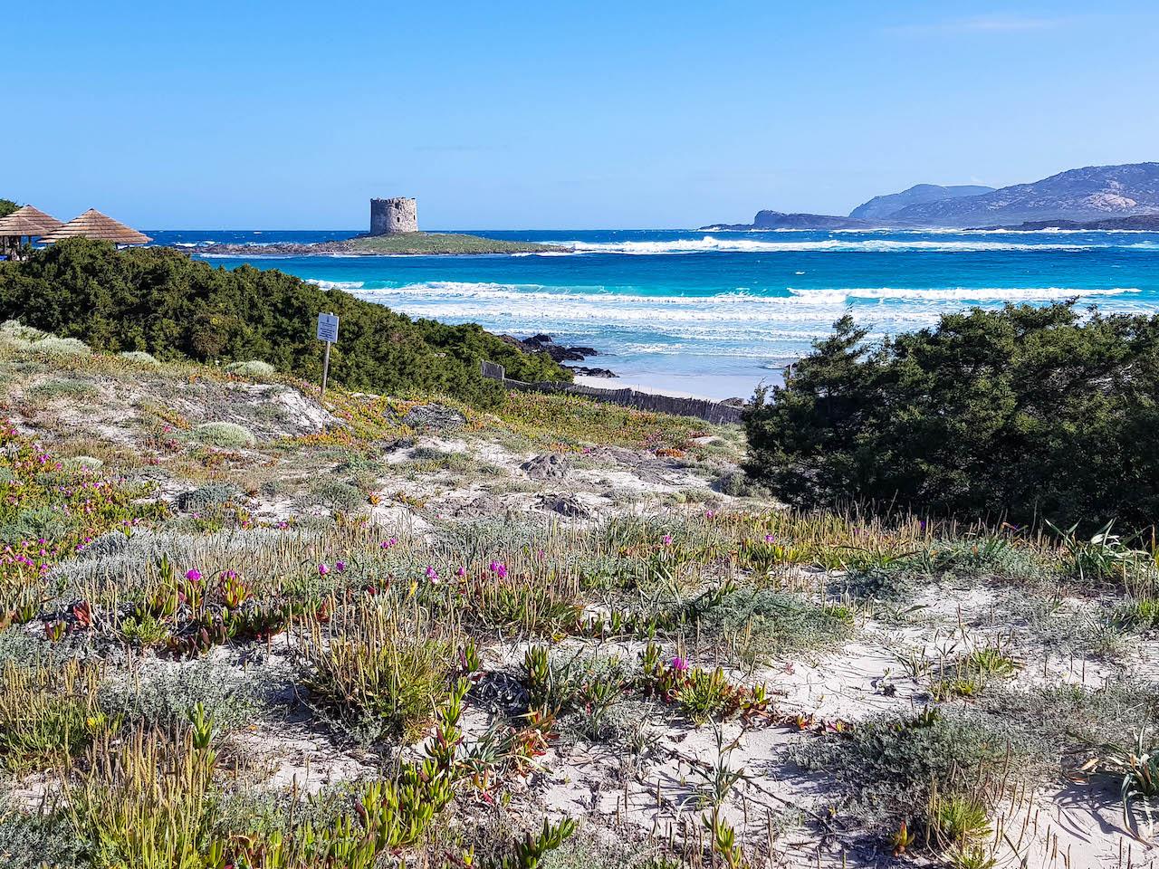 Der Strand La Pelosa mit seinem Torre.
