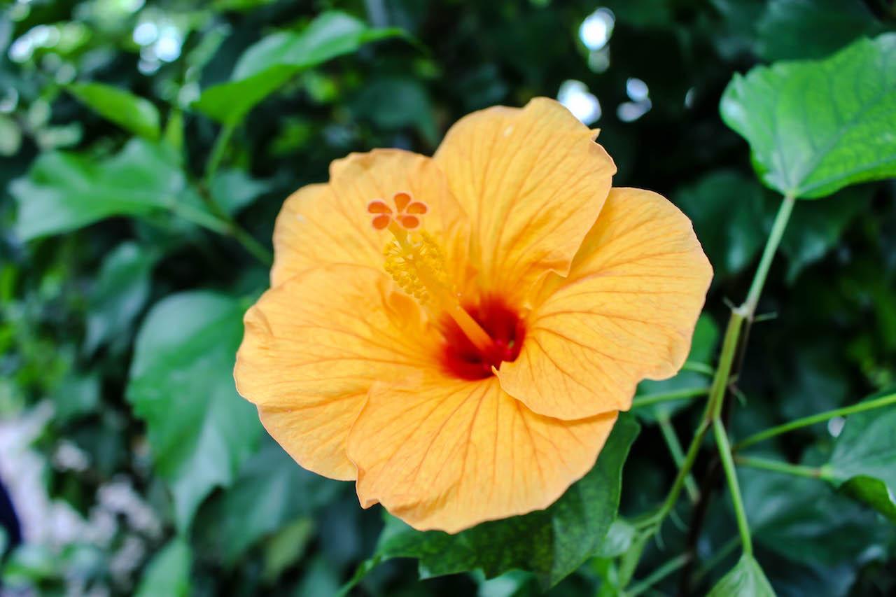 Blütenpracht auf der Insel Mainau.