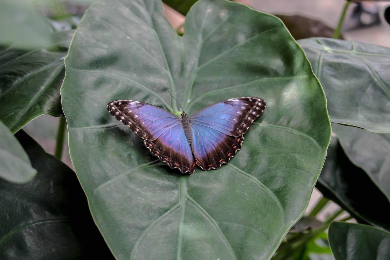 Schmetterlinge auf der Mainau.