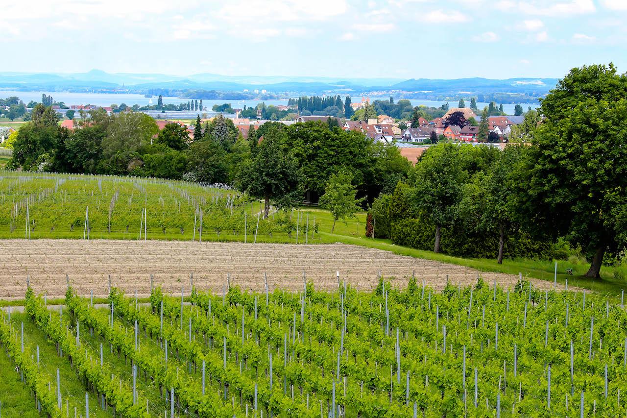 Was für ein Ausblick auf der Reichenau!