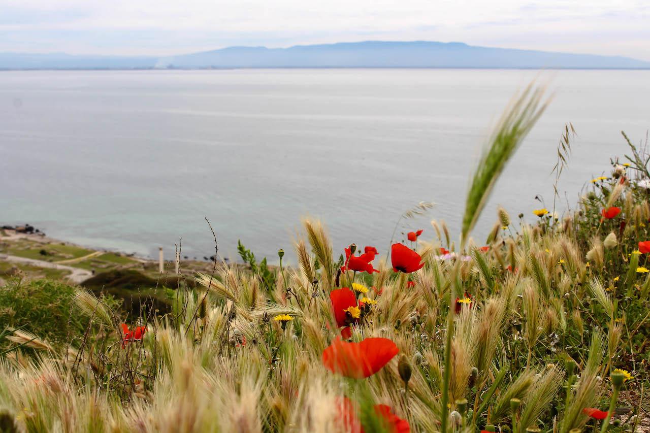 Überall Blumen auf Sardinien.