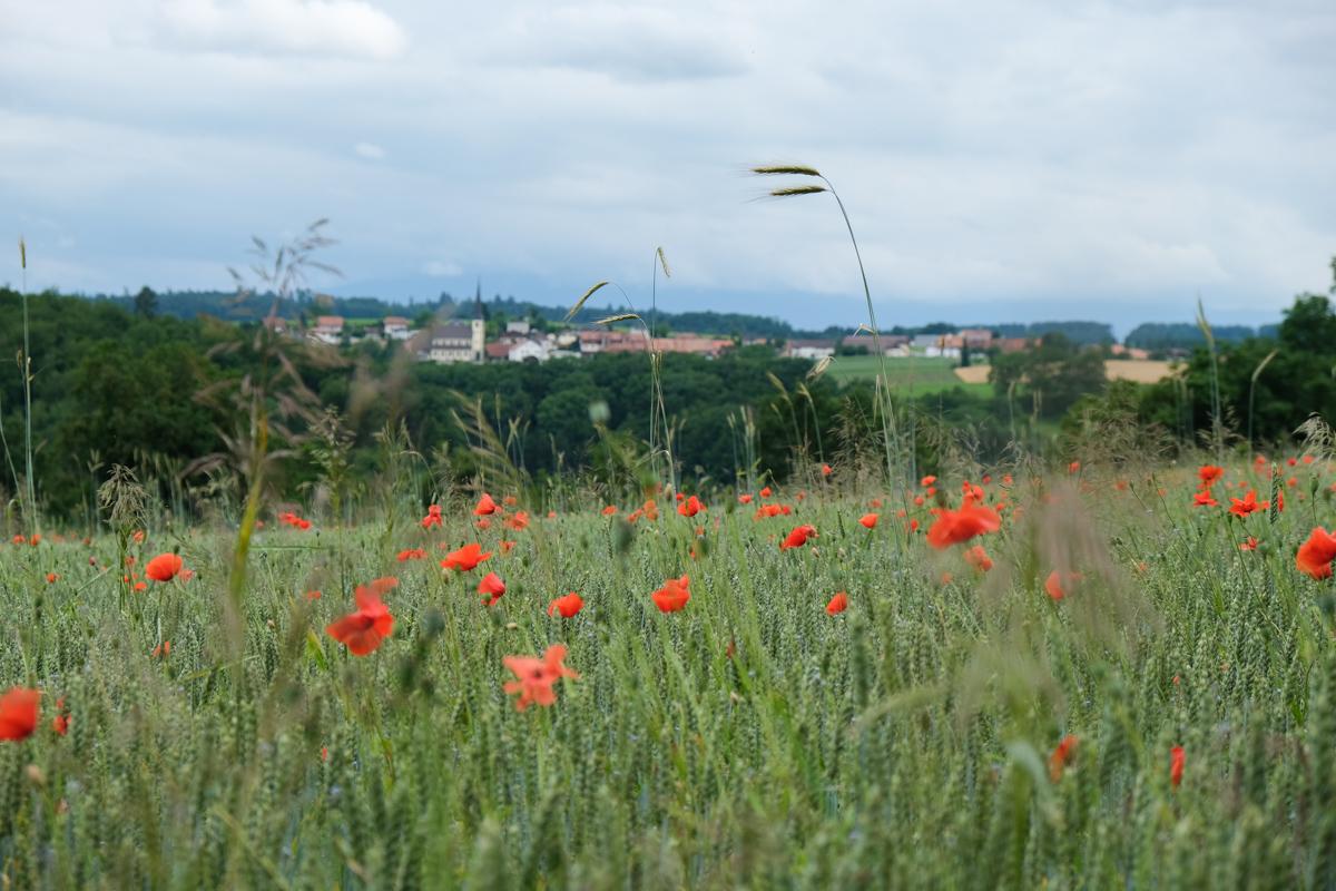 7 Tipps für eine E-Bike Tour in Avenches und Umgebung
